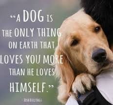 unconditional love from a dog whether you are skinny or fat