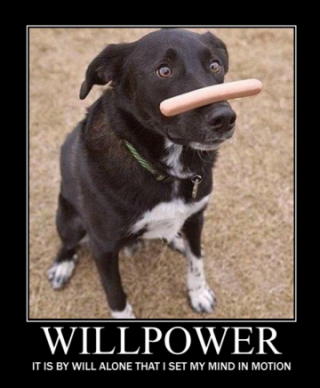 teaching a dog willpower